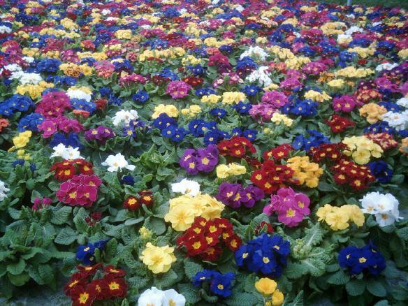 Blumen_Lange - Pro Bad Säckingen